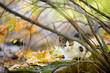Cute cat outdoors on sunny autumn day
