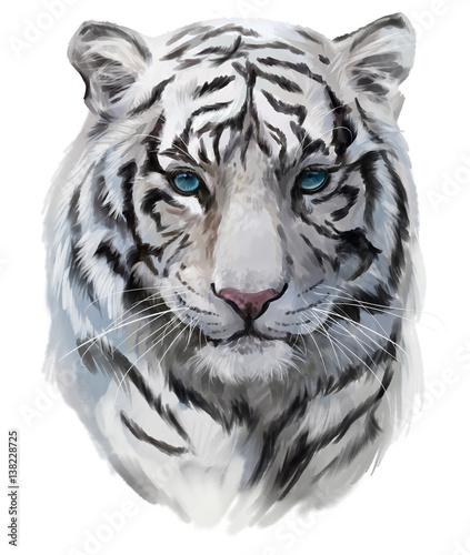 Fototapeta The head of the white tiger