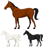 Vector illustration of a standing horse in three color variations.
