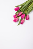 pink tulips isolated on white. Flat lay, top view.