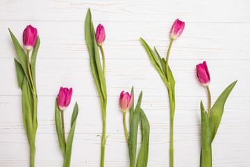pink tulips isolated on white . Flat lay, top view.
