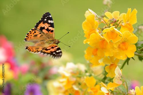 Butterfly 264