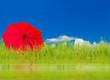 parasol rouge au milieu des herbes et des plantes aquatiques, fond de ciel bleu