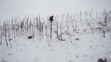 Survival boy in winter forest
