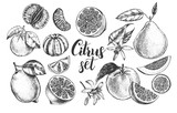 nk hand drawn set of different kinds of citrus fruits. Food elements collection for design, Vector illustration. - 138346363