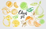 nk hand drawn set of different kinds of citrus fruits. Food elements collection for design, Vector illustration. - 138346501