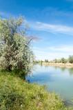 Steppe river reeds summer