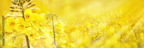 canvas print picture Flowering Rapeseed/Canola Field