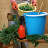 Preparing an nettle extract for plants in the garden - 138373743