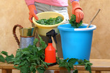 Preparing an nettle extract for plants in the garden - 138373776