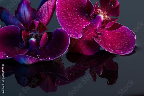 Rote Orchidee mit Wasserspiegelung und Wassertropfen