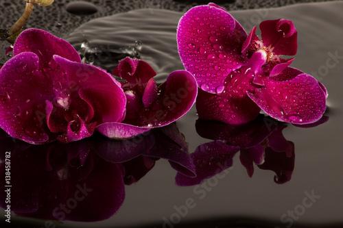 Rote Orchidee mit Wasserspiegelung und Wassertropfen - 138458782