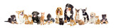 group of dogs and cats on a white background