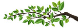 Horizontal banner with tree branch and green leaf, isolated on white. For background, footer, or nature design  - 138471329