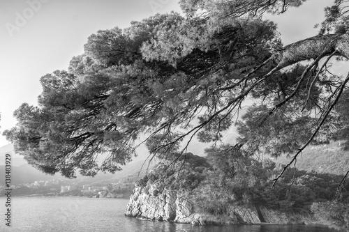 Fototapeta Sea view with rocky coast and pines.