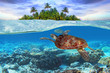 Leinwanddruck Bild Green turtle underwater at the tropical island