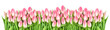 Fresh spring tulip flowers banner Floral border Bouquet