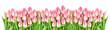 Fresh spring tulip flowers banner Floral border Bouquet - 138501931