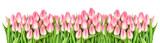 Fresh spring tulip flowers banner Floral border Bouquet - 138501931