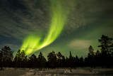Northern lights show over the trees