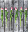 Floral flat lay Tulip flowers rustic wooden background - 138512914