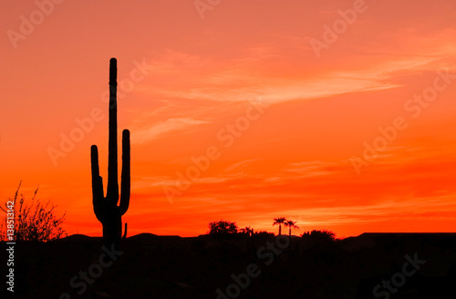Poster Koraal Bright Orange Desert Sunset with Saguaro Cactus in Silhouette