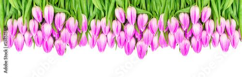 Fototapeta Floral border Tulip flowers banner Violet colored blooms