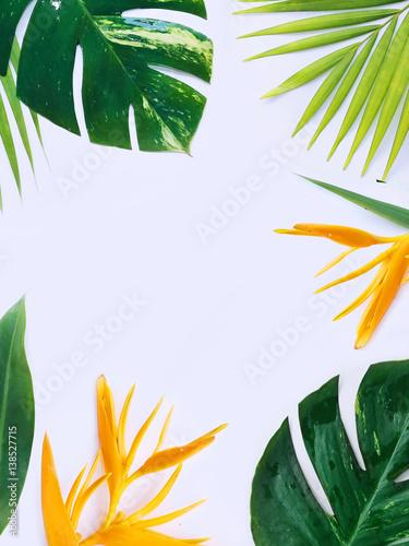 tropical plants flat lay
