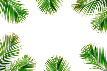 Tropical exotic palm branches frame isolated on white background. Flat lay, top view, mockup.