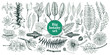 Vector botany collection. Retro illustration set