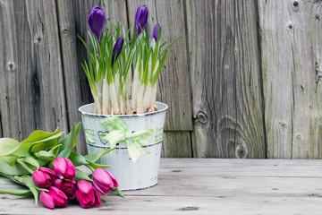 Tulpen und Frühblüher Krokusse vor Holzhintergrund