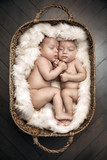 Portrait of two cute newborn borthers in the basket