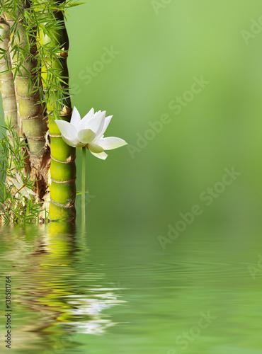 bambous à noeud et lotus avec reflets Poster
