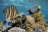 Tropical fish and Hard corals in the Red Sea