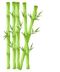Bamboo with leaf vector illustration. Asian bambu zen plants background