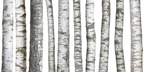 Fototapeta Verschiedene Birkenstämme, isoliert auf weißem hintergrund