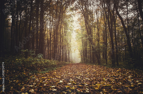 Path through forest in autumn with colorful leaves on the ground, ground level perspective