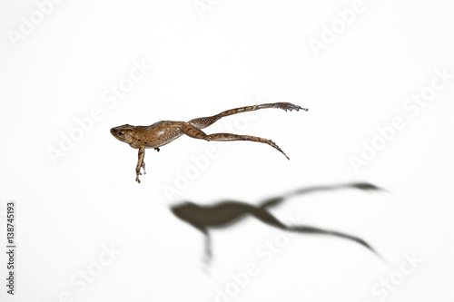 Fotobehang Kikker Frosch im Sprung als Freisteller