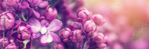 Fridge magnet Lilac flowers background