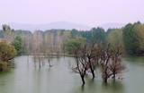Beautiful forest reflecting on calm lake in mist and tranquil nature.