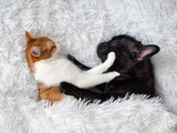 cat and dog. Cute animals are on the bed. Warm white fluffy blanket - 138787514