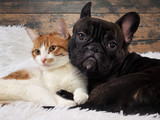 cat and dog together. Cute Pets. Portrait - 138787543