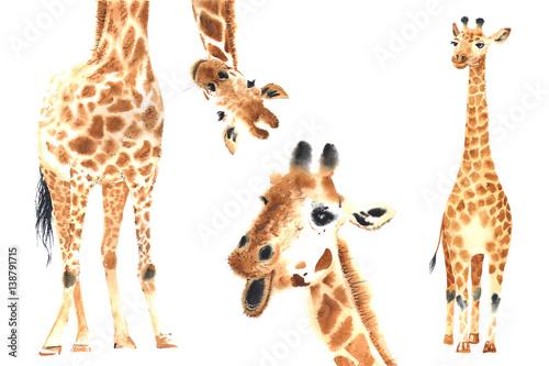 Set of watercolor giraffes - 138791715