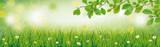 Frühlingswiese mit Blumen und Buchenästen im Hintergrund - 138798177