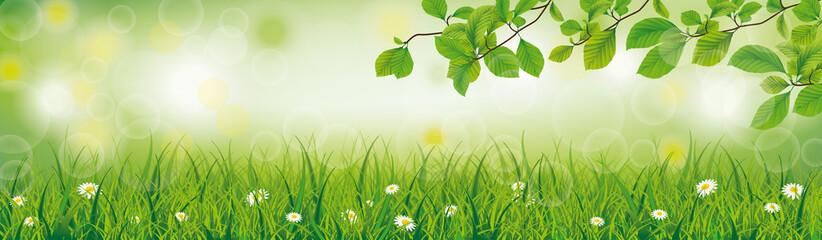 Frühlingswiese mit Blumen und Buchenästen im Hintergrund