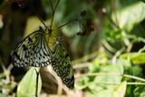 butterfly, butterflies, flowers, plants, trees