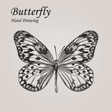 Hand drawn sketch style Butterfly. Retro hand-drawn vector illustration. Great for poster, banner, voucher, coupon.