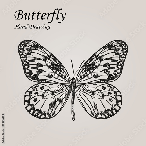 Staande foto Vlinders in Grunge Hand drawn sketch style Butterfly. Retro hand-drawn vector illustration. Great for poster, banner, voucher, coupon.