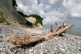 Treibholz vor den Kreidefelsen an der Ostsee, Nationalpark Jasmund, Insel Rügen, Deutschland - 138835107