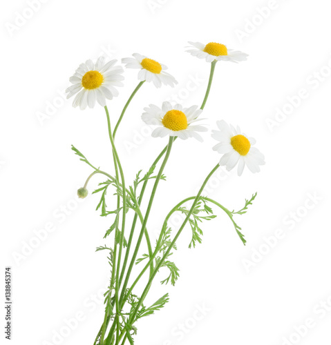 In de dag Bloemen Chamomiles isolated on white background. without shadow